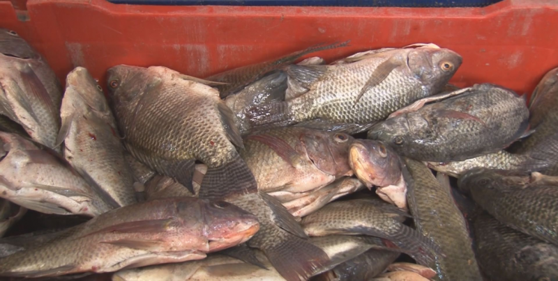 Activan operativo de vigilancia en pescados y mariscos