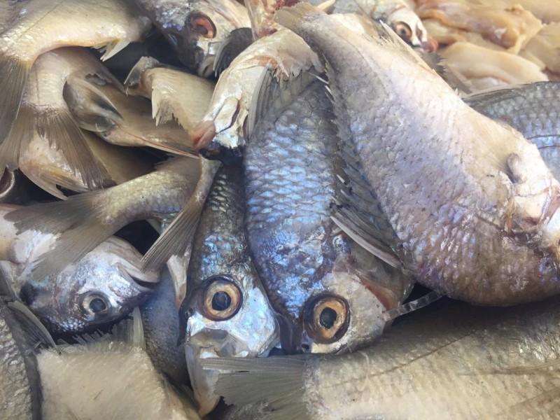 Pescaderos registran aumento en las ventas de productos del mar