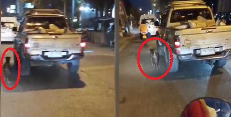 Triste momento en que un perro abandonado persigue el carro de su dueño