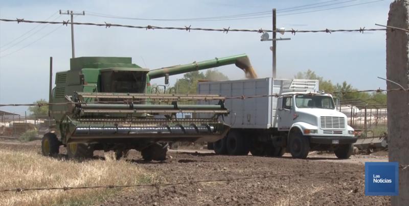 Listo el transporte de carga para acarreo de la cosecha triguera