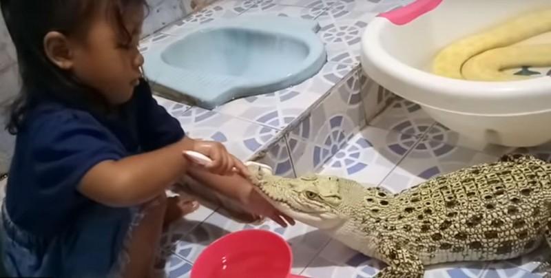 Viralizan grabaciones de niña cepillando los dientes y maquillando a un cocodrilo