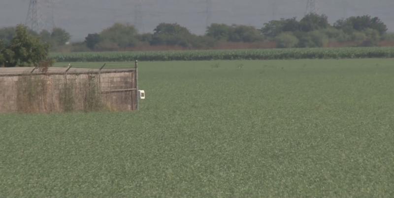 Buscan conformar la Unión de Productores de Garbanzo para defender intereses de agricultores
