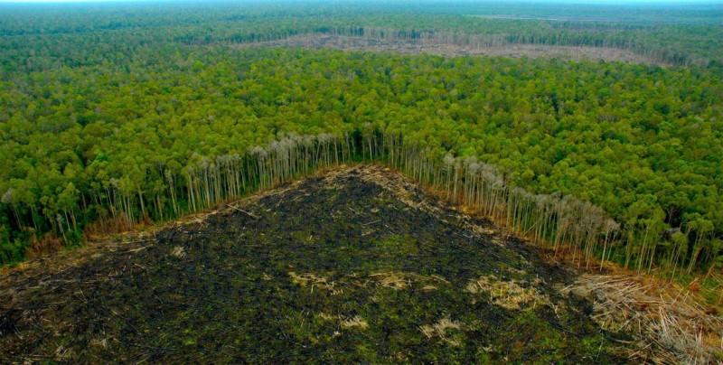 """""""Detén la destrucción del Amazonas"""", pide Greenpeace a Bolsonaro en Jerusalén"""