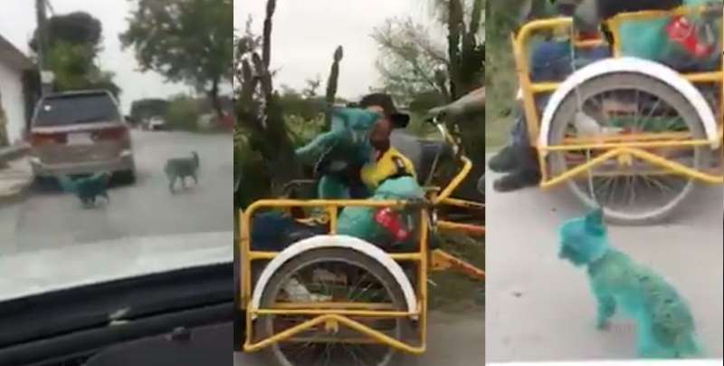 """Pintan perros de verde por """"moda"""" en Nuevo León"""