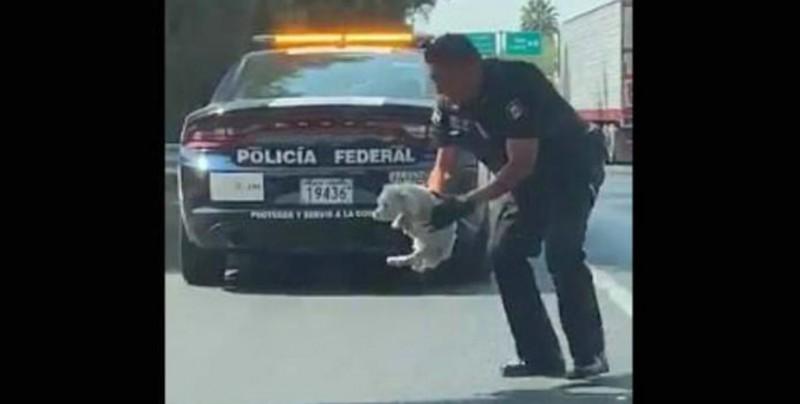 #Video Policía se detiene para rescatar a un cachorro de la carretera