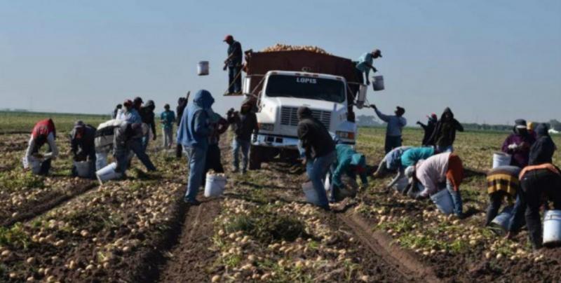 Recomiendan a trabajadores del campo seguir medidas de protección  para evitar intoxicaciones