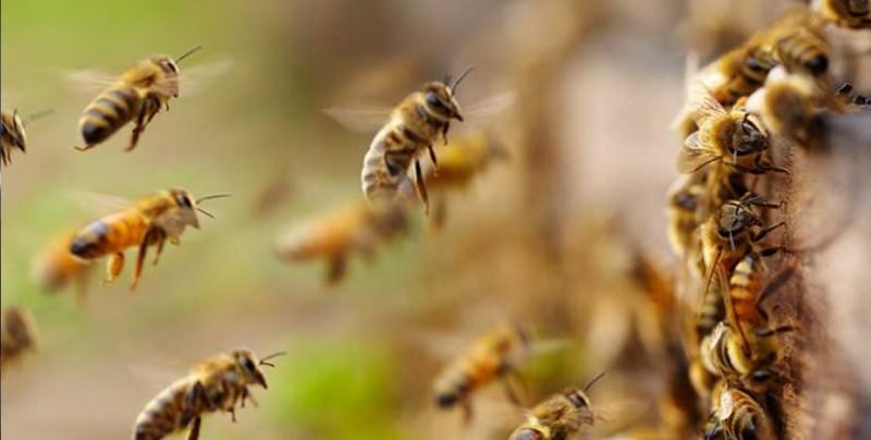 #Video ¡Increíble! Mujer tenía cuatro abejas vivas en el ojo