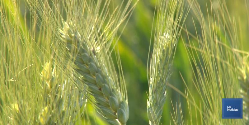 Productores agrícolas se reunirán con la SADER en México