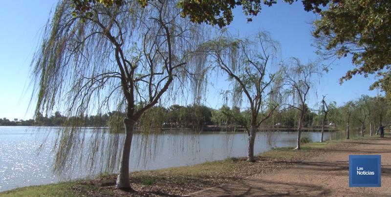 """Se secan """"sauces llorones"""" en la Laguna del Náinari"""