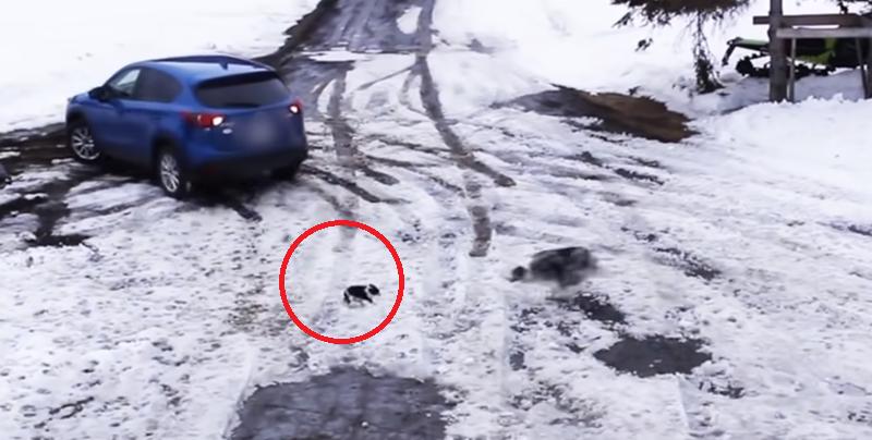 Perro salva a un cachorro de ser atropellado