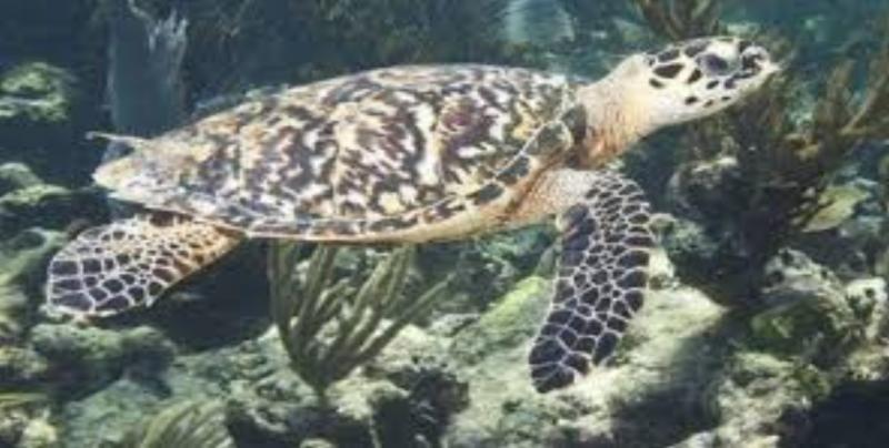 Llaman a no utilizar plásticos en playas para no afectar a tortugas