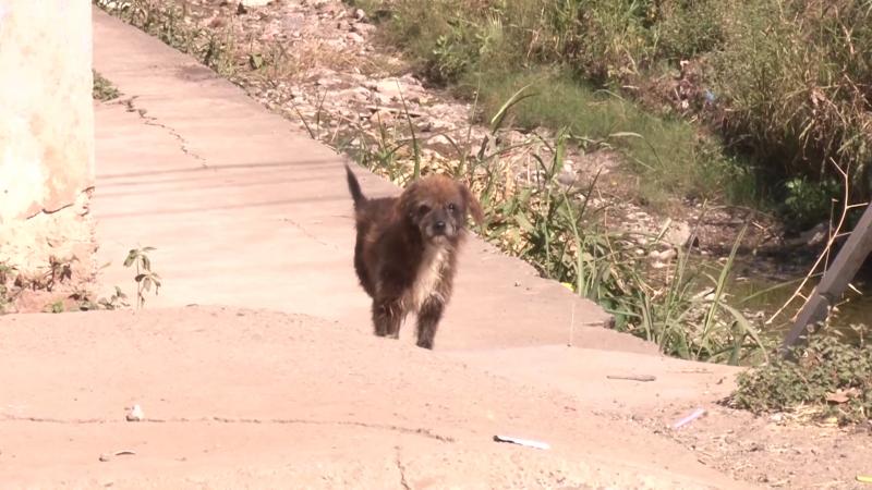 Vectores y Zoonosis continúa con campaña de vacunación de perros y gatos