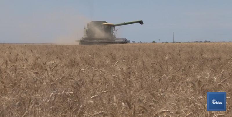 Listo el transporte de carga para el acarreo del trigo