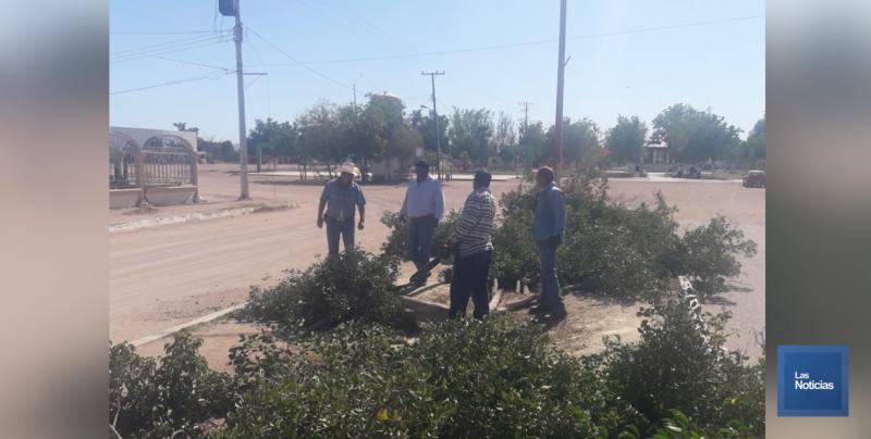 """Talan 50 árboles en El Tobarito, estaban """"enfermos"""""""