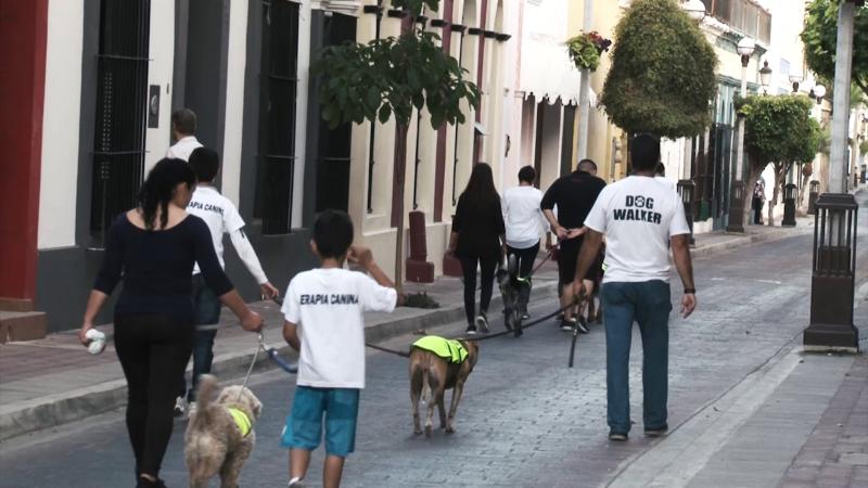 """""""Caminatas caninas"""", una terapia para niños con autismo"""