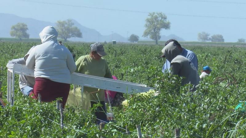 Continúan violando derechos laborales de jornaleros agrícolas