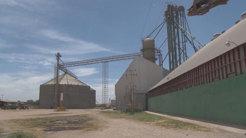 No permitirán los cobros por servicios de almacenamiento a los productores de maíz : CAADES
