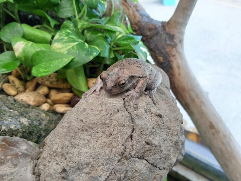 ¡Si se topa con un sapo o rana en casa, no lo mate!