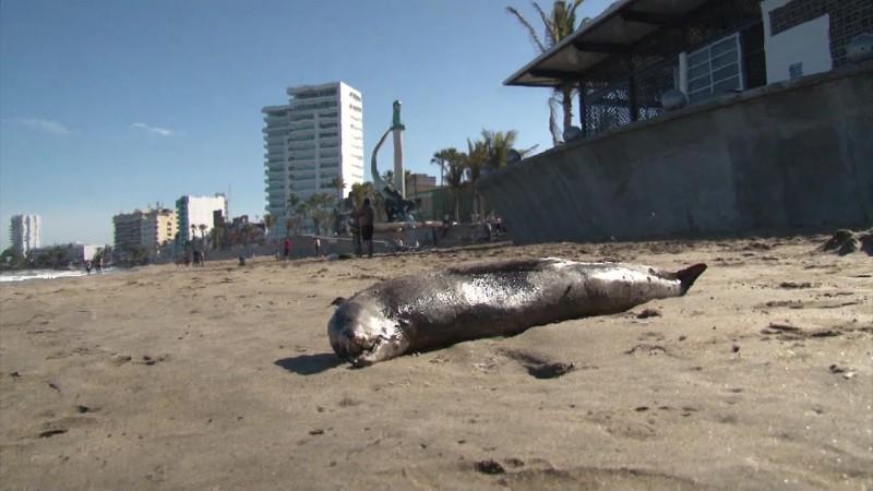 Aparece anguila muerta en playas de Mazatlán