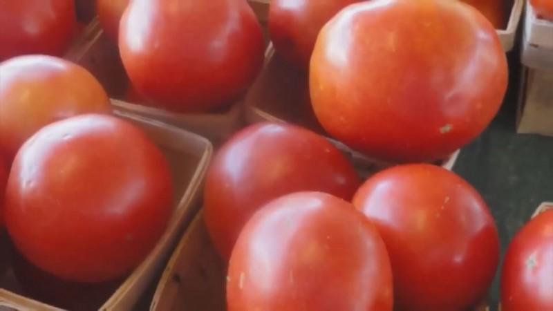 Pagar aranceles para exportar tomate a Estados Unidos, costaría a productores de Sinaloa 70 millones de dólares