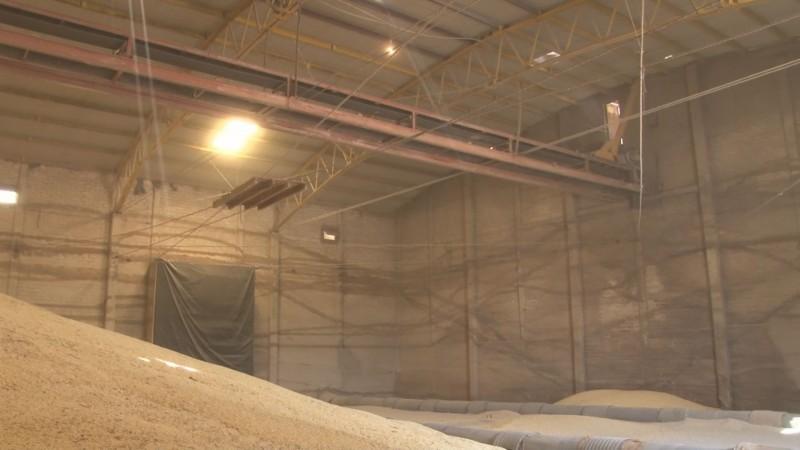 Productores de maíz exigirán a los industriales el pago de utilidades que obtienen por sus cosechas