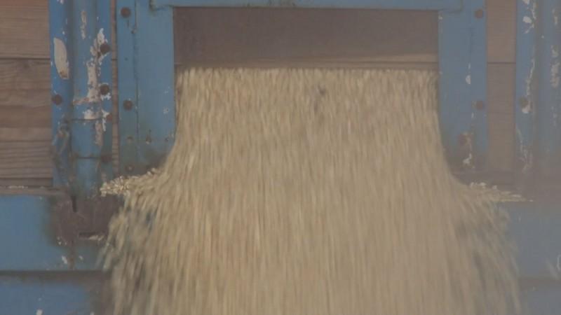 Piden regular la compra de maíz al menudeo para evitar el robo de cosechas