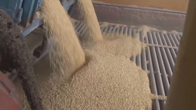 Denuncian que bodega de JOVA devolvió expedientes de mas de 300 productores de maíz