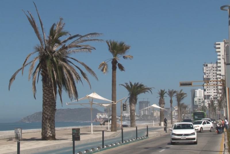 Buscará comuna reemplazar palmeras secas del Malecón