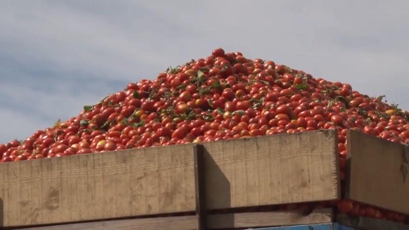 Afectara gravemente la economía en general el arancel aplicado a la exportación de tomate