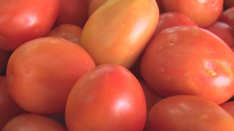 Congreso a la expectativa para apoyar a horticultores ante imposición de arancel al tomate