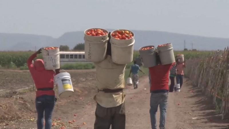 Confían en que mejoren acuerdos en torno a imposición de arancel al tomate
