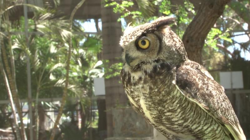 Celebran con plática de concientización el Día Mundial de las aves