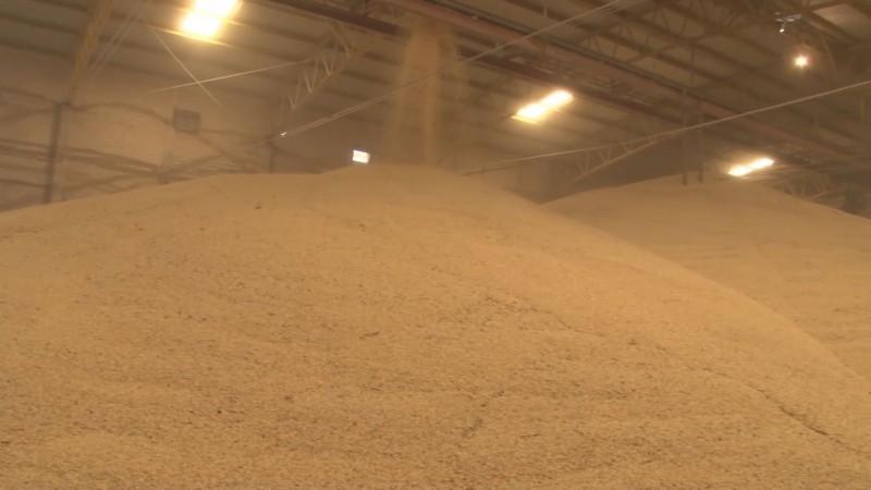 Elevan organismos agrícolas la exigencia para que se inicie una investigación por dumping al maíz importado de Estados Unidos