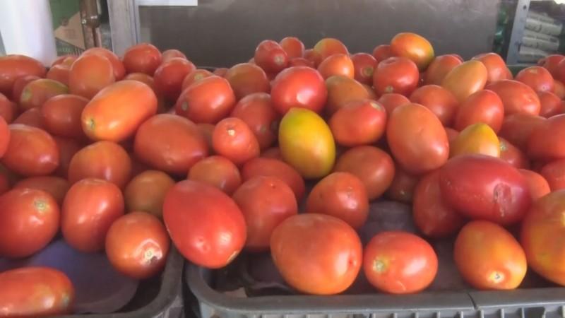 Gobierno de México está acotado para contrarrestar los aranceles impuestos al tomate mexicano