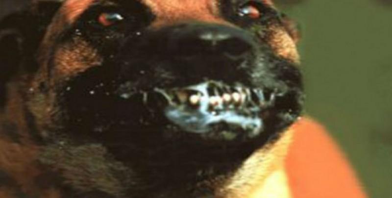 ¡A extremar precuaciones con los perros!: Vectores