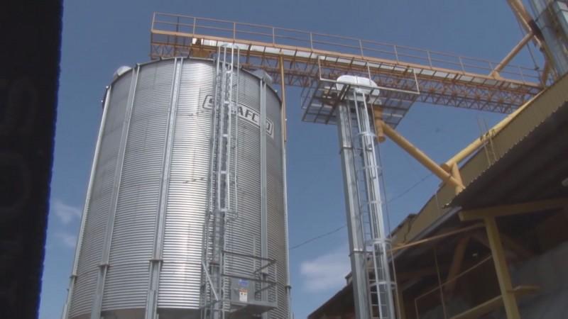 Están validadas 5.5 millones de toneladas de maíz de la cosecha de Sinaloa