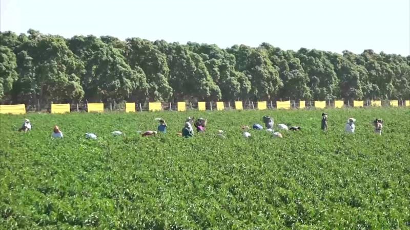 Se convierten campos agrícolas en tours en Mazatlán