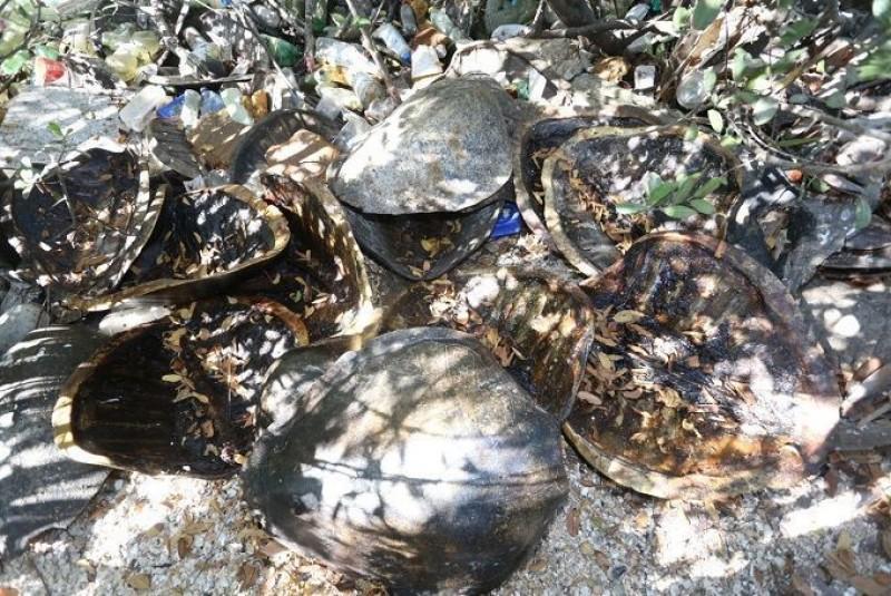Avanza Ecología en investigación por tiradero de caparazones