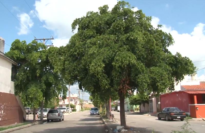 """Urge reforestar Mazatlán, faltan más """"pulmones"""" en el municipio: Ecología"""