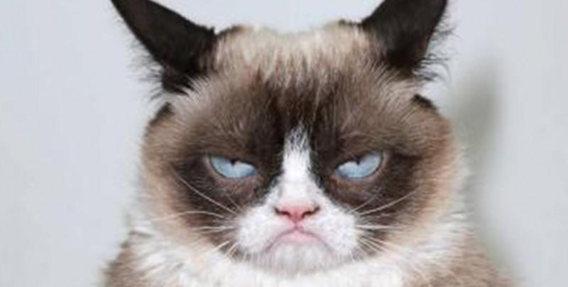 "Muere ""Grumpy cat"" la famosa gatita inspirada en memes"
