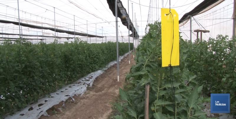Productores de tomate tienen confianza en que EU de marcha atrás