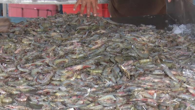 En crisis la actividad acuícola por recorte de presupuesto