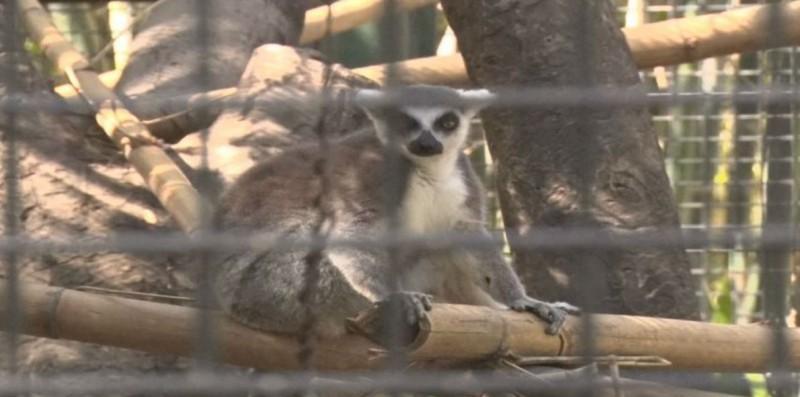 En mejora constante el Zoológico de Culiacán