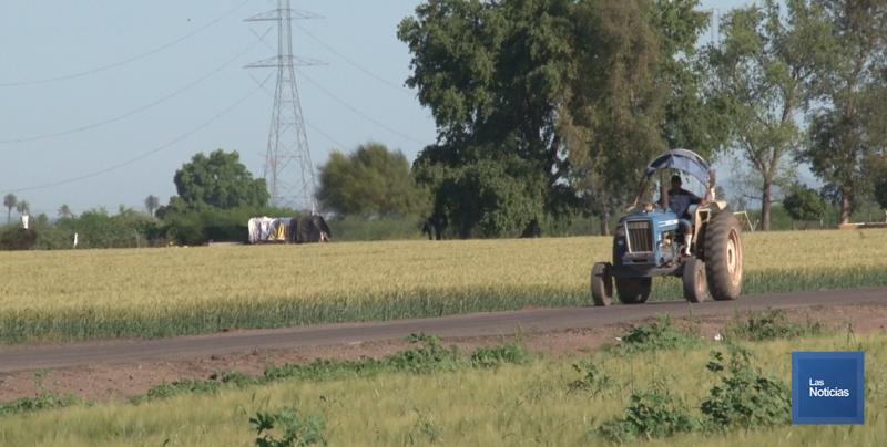 Dos casos de secuestros se registran en Cajeme; productores urgen resultados