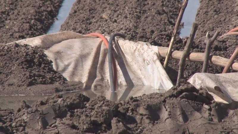 Cultivos fuera de ciclo podrían enfrentar problemas en el abasto de agua para riego