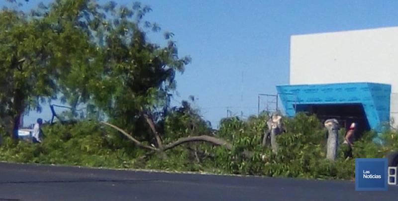 Ecologista pide incrementar las sanciones a quienes talen árboles en Cajeme