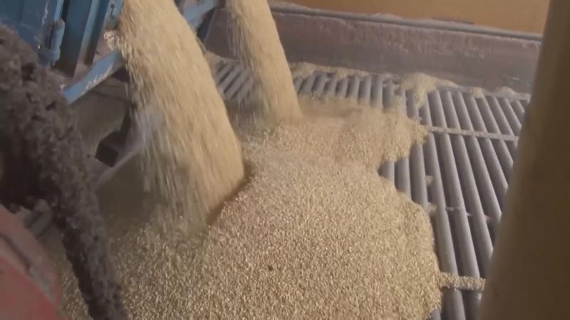 A punto de destrabarse la contratación de un millón y medio de toneladas de maíz blanco de Sinaloa