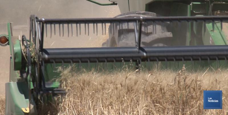 Gestionan entrega oportuna de estímulos para el trigo