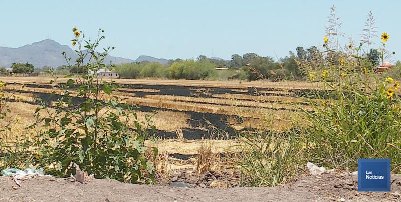 Encienden Gavilla en los alrededores de Fraccionamiento las Haciendas