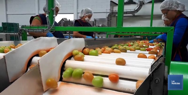Sin cambios en las exportaciones con el tomate mexicano: Manuel Cázarez Castro
